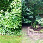 Natural Habitat Garden Design and Maintenance profile image.