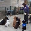A Better Pet LLC profile image