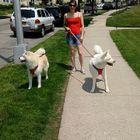 All For Paws Pet Sitting & Dog Walking logo