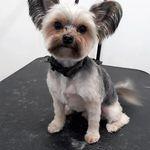 Dog Store profile image.