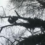 Bear tree care profile image.
