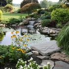 Pond Form - Water Feature & Landscaping