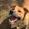 Happy Dogs and Purrfect Pets profile image