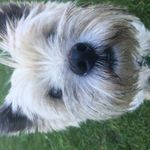 Happy Dogs and Purrfect Pets profile image.