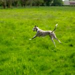 Urmston Pet Services profile image.