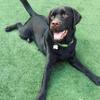 NoMa Pet Walking & Care profile image