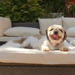 Canine Cuddles profile image.