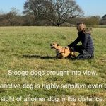 Be More Dog profile image.