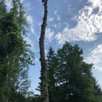 B. Vanstone Tree services profile image.