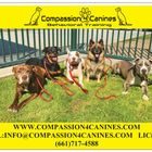 Compassion 4 Canines