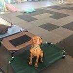 My Little Dog Training Academy & Daycare profile image.