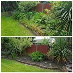 Mowen Gardening Services  profile image.