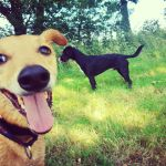 Holty Paws - Dog Walking & Bespoke Pet Care Services profile image.