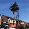 JG Tree Services profile image