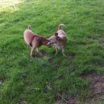 Danescourt and radyr dog walking petcare profile image.