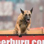 Southern Warrior K9 Dog Training profile image.