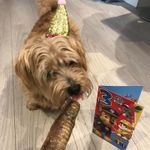 Prestige Dog Services profile image.