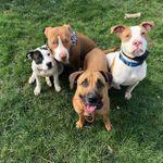 Wiggly Butts Dog Training, LLC profile image.