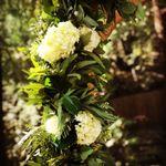Frangipani Flowers and Gifts profile image.