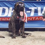 Mr O's The Dog Training Place profile image.
