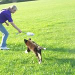 Karen Medway-Torquay Dog Training profile image.