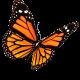 Butterflies Bereavement Support logo