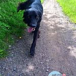 Need2Lead Dog Walking & Pet Services profile image.