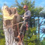 Portsdown Tree Surgery profile image.
