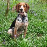 Hobbs Holiday Hounds profile image.
