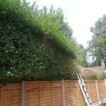 D Evans gardening services  profile image.