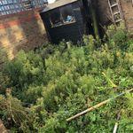 pjs Affordable tree and landscapes profile image.