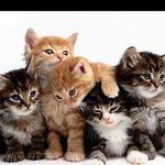Hatfield Pet Services profile image.