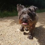 Lola and Buds Dog Walking Services profile image.