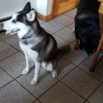 PetEx; Pet Sitting Services profile image.