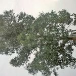 R&P tree and garden services profile image.