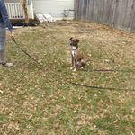 Allegiance Dog Training LLC profile image.