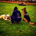 Miyagis Dog Training and Behaviourist Services