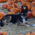Love of Dogs Training profile image.