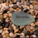 Heart in the Moment Mindfulness Coaching LLC profile image.