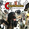 Animal Magnetism Pet Professionals profile image