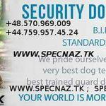 Spetsnaz Security International, Ltd Fidel Matola Close Protection Services Worldwide profile image.