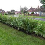 Clean Lawn & Landscapes profile image.
