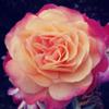 Holistic Mindfulness Coaching profile image