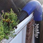 Sapphire Pest Management Ltd (Sapphire Environmental Services) profile image.