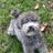 Shazies dog walking services profile image