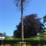 Jb tree and gardening services profile image.
