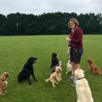 Walking-the-Dogs profile image.