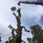 Wood lands tree care profile image.