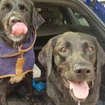Dacorum Dog Walking & Pet Services profile image.