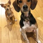 Maher & Hound Dog Training and Behaviour profile image.